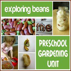 Finding the Teachable Moments: Preschool Gardening Unit: exploring beans