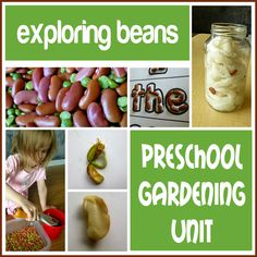 Preschool Gardening Unit: exploring beans.  Book suggestions, science, math and literacy activities. I love this unit! #plants #beans #earlylearning #math #kids