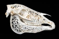carved horse skull. little morbid but really cool