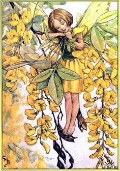 Stock Photo - Flower Fairies Illustration by Cicely Mary Barker - The Laburnum Fairy, 1940 Cicely Mary Barker, Fairy Land, Fairy Tales, Fairy Pictures, Vintage Fairies, Love Fairy, Beautiful Fairies, Flower Fairies, Fantasy Illustration