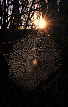 wowtastic-nature:  Sunrise dans les bois.  sur 500px par Stefano Colognori☀ NIKON D3200-f / 11-1 / 125s-30mm-ISO100, 3354✱5274px-note: 89,7