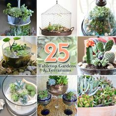 25 tabletop garden terrarium ideas with links to each site with more information on each photo/idea