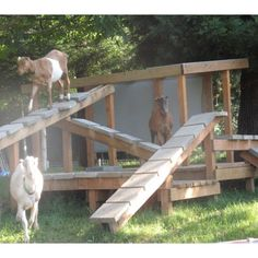 Animal Enrichment Fund by Woodstock Farm Animal Sanctuary Help us build a goat playscape!