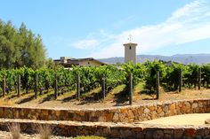 Robert Mondavi Winery Tour - Napa, California - This Beautiful Day