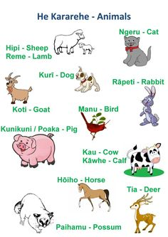 Animals Animal Activities, Preschool Activities, Multicultural Activities, Bored At School, Waitangi Day, Maori Words, Describing Words, Learning Stories, Abc Poster