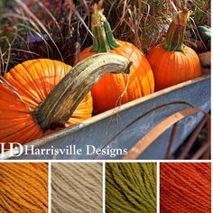 'Pumpkins in Hay' color palette featuring our Shetland yarn in: Gold, Sand, Tundra and Poppy.