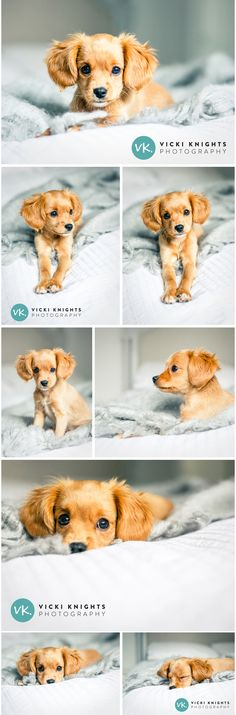 It's a gloomy Monday morning here in Blighty so to cheer myself up I did a little mini shoot with our new puppy Betsy. I've realised photographing puppies is very similar to photographing babies….you can just sit them on a bed in front of a window and make lots of silly noises to get their attention! I love this little …