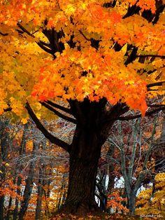 Autumn Tree, Florida photo via miki