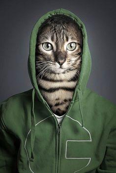 Undercats – Un photographe habille des chats à l'image de leurs propriétaires