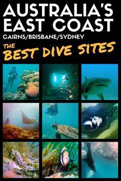 The Best Dive Sites On Australia's East Coast (Cairns/Brisbane/Sydney)