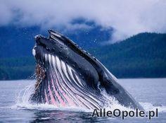 safari na wieloryby (Opole)