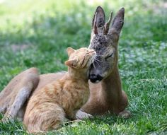 Love transcends species