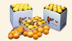 these organic oranges make me so happy! kroger has them in the organic section. mmmmmmmmmmmmmmm