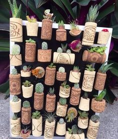 Shop online for all your Cactus and Succulent must haves.Very creative succulent wall🤗 Your next DIY project?How to Water Succulents – the Right Way - The Plant World Succulent Wall, Succulent Gardening, Cacti And Succulents, Planting Succulents, Planting Flowers, Propagate Succulents, Decoration Plante, Wine Cork Crafts, Cactus Y Suculentas
