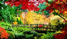 A bridge in an Asian garden in the fall, beautiful Autumn Nature, Autumn Forest, Nature Tree, Nature Hd, Autumn Scenery, Autumn Summer, Spring, Nature Images, Nature Pictures