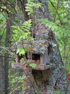 Linnunpesä naamioituu hyvin maastoon ja puuhun.