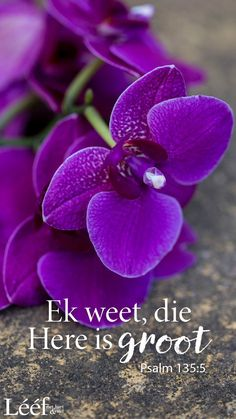 Inspirational Qoutes, Afrikaans Quotes, Christian Quotes, Psalms, Bible Verses, Me Quotes, Prayers, Words, Hart