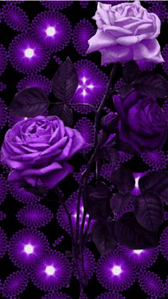 Pin Image by Celebrity Kusmia Flowers Gif, Beautiful Rose Flowers, Purple Flowers, Purple Roses Wallpaper, Butterfly Wallpaper, Beautiful Nature Wallpaper, Beautiful Gif, Pretty Wallpapers, Belle Photo