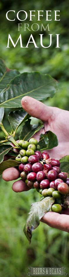 Farm to Table food tour in Maui with homegrown coffee looks cool - Have you ever gone on a farm to table tour?