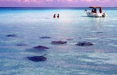 Stingray City, Grand Cayman, Cayman Islands.  We spent a wonderful day here once, wish I could take Noah to it.