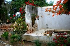 In the garden of Casa Dracula - Built in 1852 in Todos Santos. via The Design Tripper.com