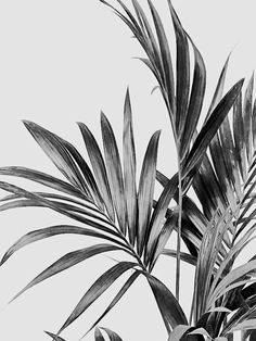 Black And White Picture Wall, Black And White Posters, Black And White Wallpaper, Black And White Wall Art, Black And White Pictures, Black And White Words, Black And White Leaves, Black And White People, Black White
