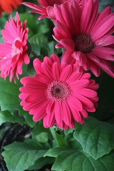mother's-day-3 by sophistimom, via Flickr