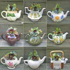 Planter des plantes grasses dans des théières... ...