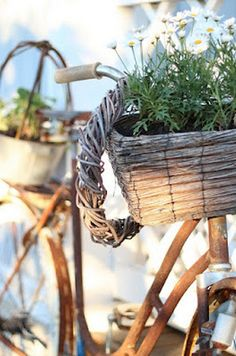 Rusty Bike Planter - why waste an old bike when it can add so much charm & character as a feature planter? Use wire to secure a basket or two to the front & back, fill with potting mix and colourful flowers or trailing herbs. Easy DIY Potting Mix Recipe @ http://themicrogardener.com/easy-diy-potting-mix-recipe/ | The Micro Gardener