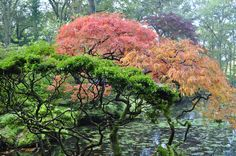 fall colours at  japanese garden in Clingendael