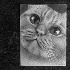 #Portrait of Charlie. Best Co-worker I have ever had. | hand drawn with #graphite #pencils - #cat