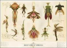 Deep-Forest Sprites ~ art by Tony DiTerlizzi. http://mydelineatedlife.blogspot.ca/2011/03/people-whom-we-cannot-see.html
