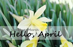 Goodbye March, Hello April #april goodbye march hello april daffodils