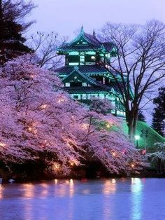 Cherry Blossom in Bloom, Japan