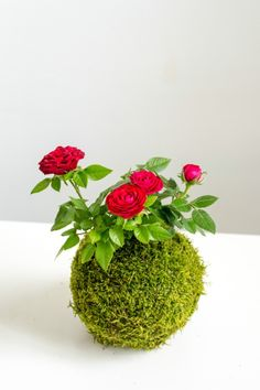 A beautiful rose kokedama from our workshop