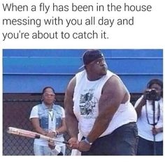 A Fly In The House