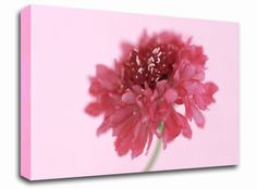 Pink on Pink Pom Pom floral canvas from only £19.99 at Infusion Art http://www.infusionart.co.uk/products/Pink-on-Pink-Pom-Pom-251406.aspx