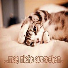 guten morgen - http://guten-morgen-bilder.de/bilder/guten-morgen-8/
