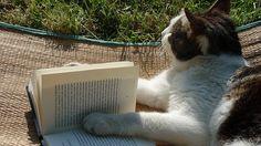 Poetic cats