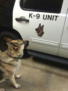 """Hey K-9 unit... That's me!"" …"