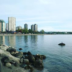 Heron rests on the edge of a city. #Vancouver #englishbaybeach