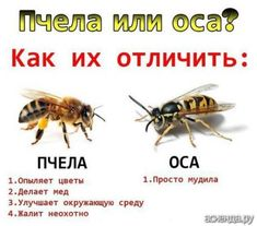 Cat Memes, Funny Memes, Jokes, Wasp Stings, Russian Humor, Clever Quotes, Aesthetic Stickers, Quotations, Haha