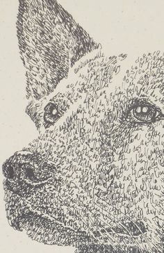 Australian Cattle Dog art portraits, photographs, information and just plain fun. Also see how artist Kline draws his dog art from only words at drawDOGS.com #drawDOGS http://drawdogs.com/product/dog-art/australian-cattle-dog-portrait-by-stephen-kline/