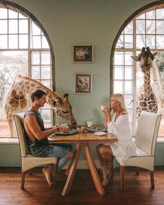 "147.2 k gilla-markeringar, 3,683 kommentarer - JACK MORRIS (@doyoutravel) på Instagram: ""Took my girl @gypsea_lust for a birthday breakfast with a couple of our giraffe friends happy…"""
