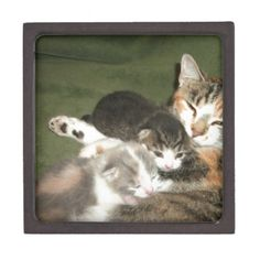 Kittens With Mommy Premium Keepsake Boxes!  Cuteness overload!  Lots of cat stuff and the store has a new look!  Check it out!  http://www.zazzle.com/conquestkitty*