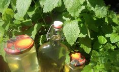 sirops - www. Sauce Anglaise, Pots, Horticulture, Glass Vase, Food And Drink, Recipes, Moment, Dame, Liqueurs