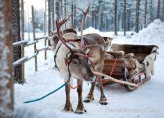 Joulupukin poro odottaa vanha valkopartaa Joulupukin pajakylässä