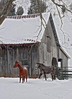 Barn With Horses In Barn Yard