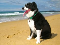 Meet Sasha the dog, loves walks along the beach, playing in the water and chasing sticks.
