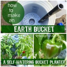 "If you have any nooks and crannies on your patio or in your garden, and would love to utilize that space, you might consider making a self-watering, or ""Earth Bucket."" They conserve water and grow amazing peppers and tomatoes!"
